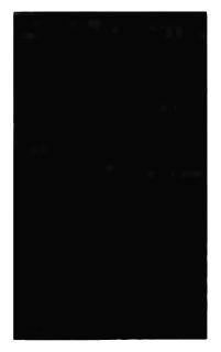 99151 MULBERRY 1G IVORY WRINKLE STD BLANK PLATE
